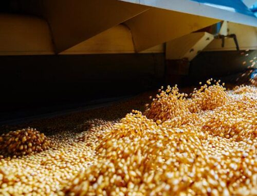 Why You Need a Quality Grain Moisture Tester