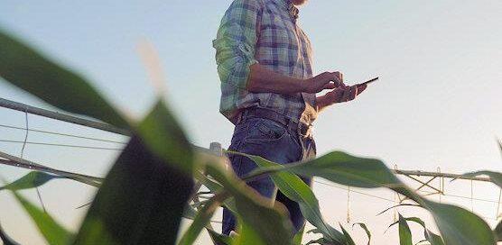 testing corn for moisture
