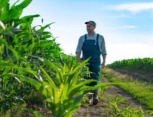 Measuring Corn Stalk Strength