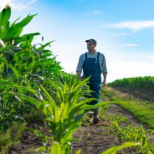 Measuring Corn Stalk Strength - 2